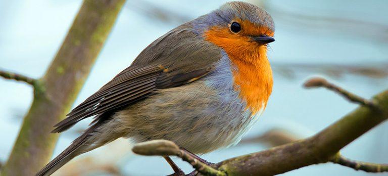 Round robin bets