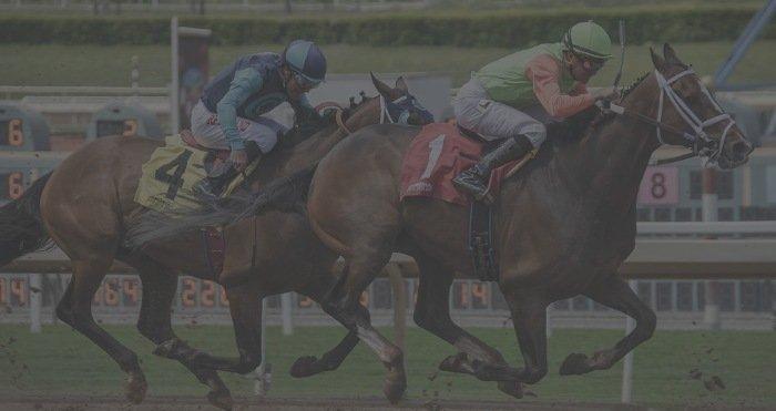 Biggest Accumulator Wins Horses
